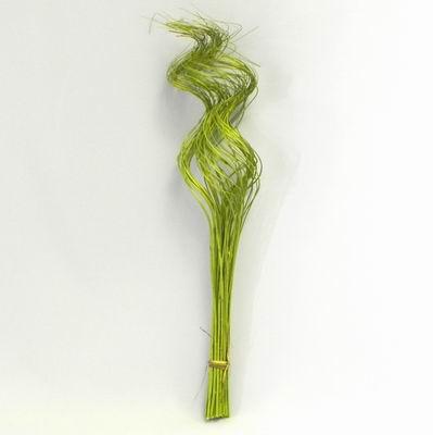 Sušina proutí kroucené 60cm zelená