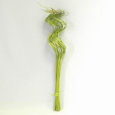 Proutí kroucené s perličkou 60cm zelená