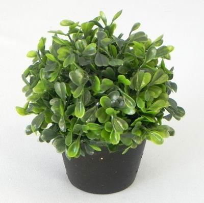 Buxus v květináči mini 13cm