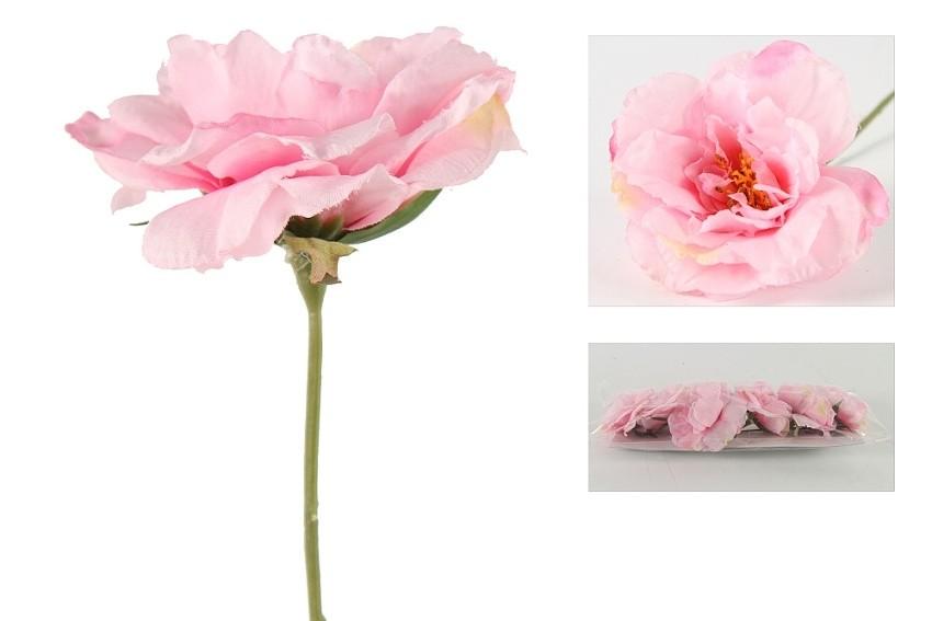 Růže čajová, sada 6 ks, světle růžová