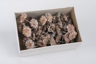 SU Protea Rosette 8-9cm Whitewashed 50ks